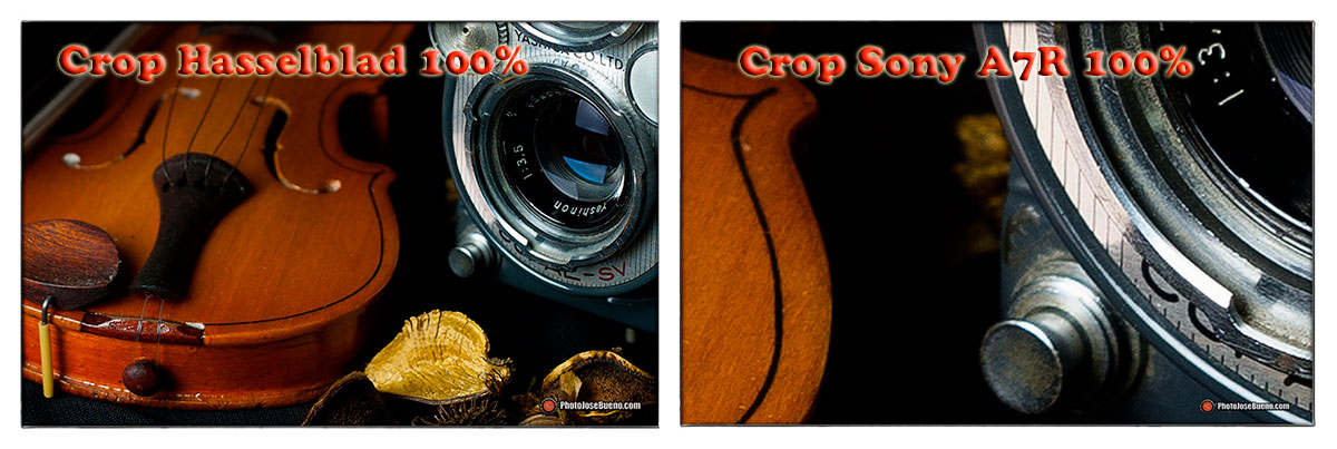 Crop-Hassel-Sony100