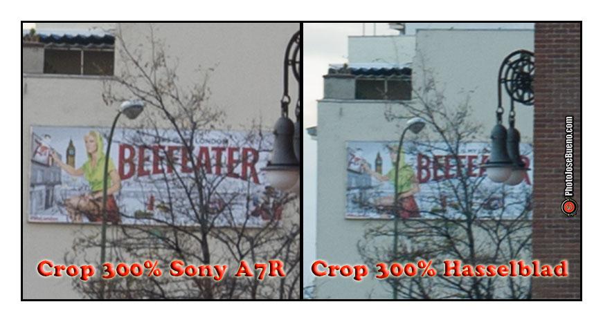 Crop-Sony-y-Hassel